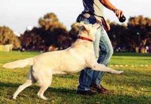 El abc del perro feliz - educacion canina
