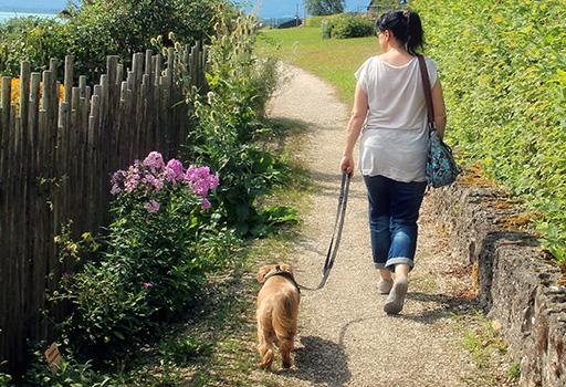 Soluciones para el paseo