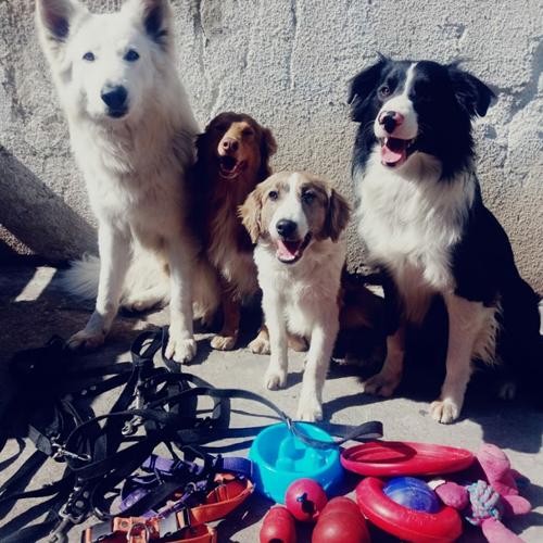Adiestramiento 4 Perros