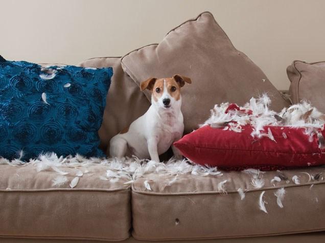 problemas de comportamiento de perros