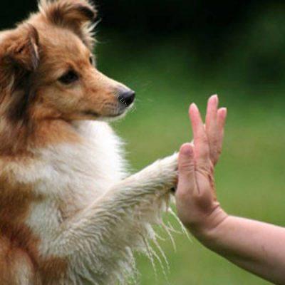 Productos para Adiestramiento y Educación canina