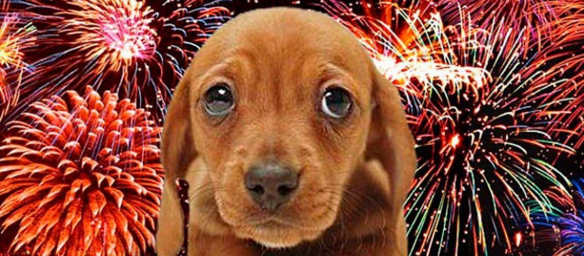 perro-y-fuegos-artificiales